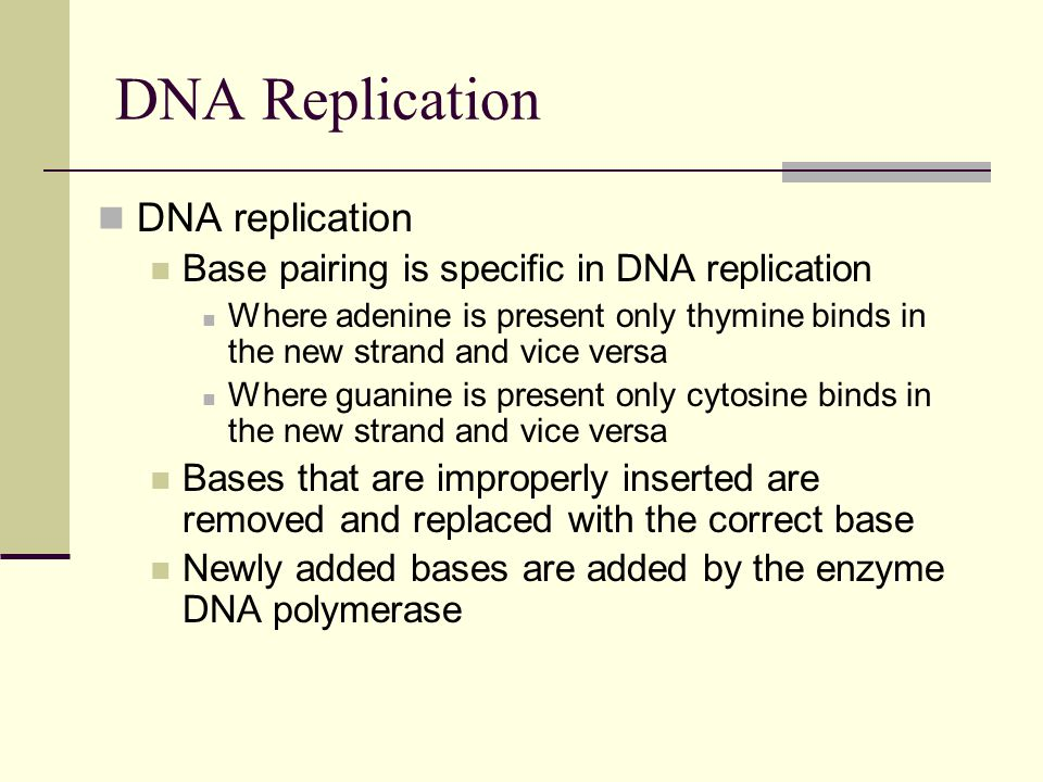 DNA Replication DNA replication