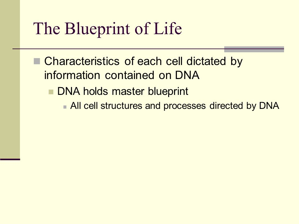 The Blueprint of Life Characteristics of each cell dictated by information contained on DNA. DNA holds master blueprint.