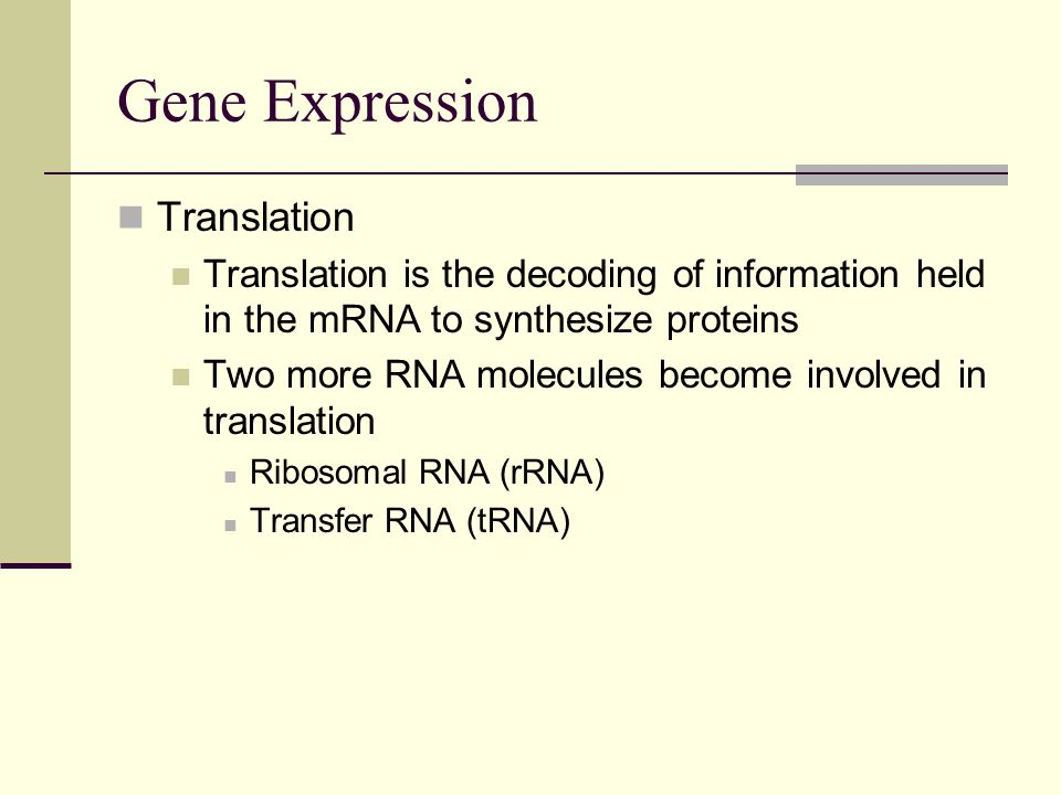 Gene Expression Translation