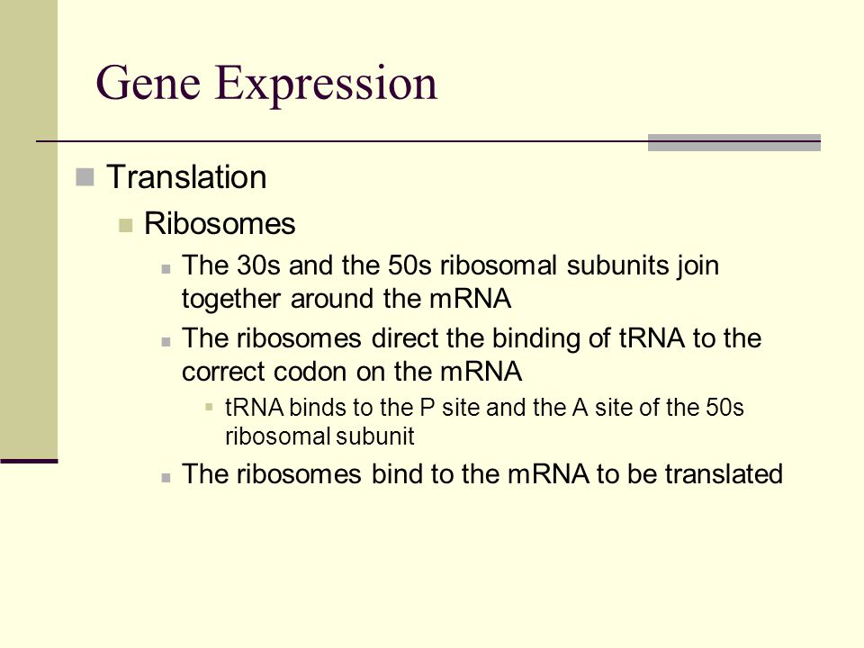 Gene Expression Translation Ribosomes