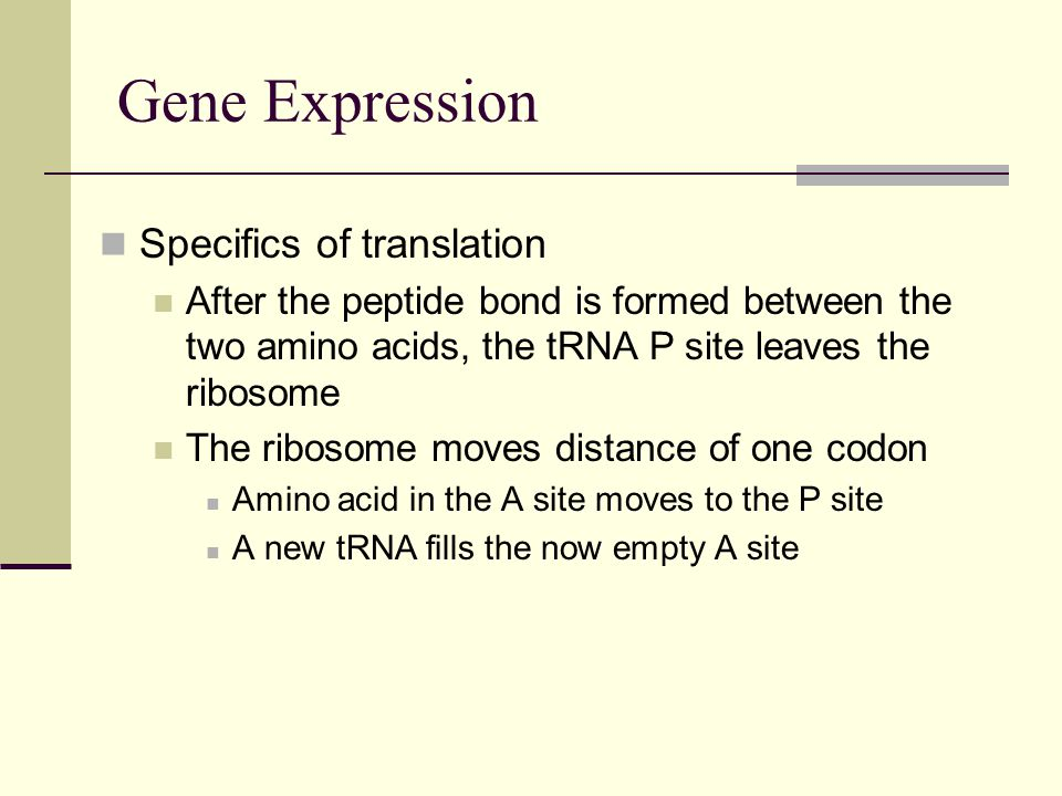 Gene Expression Specifics of translation