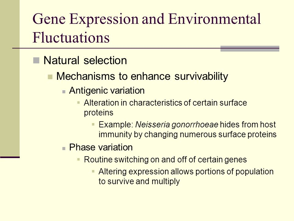 Gene Expression and Environmental Fluctuations