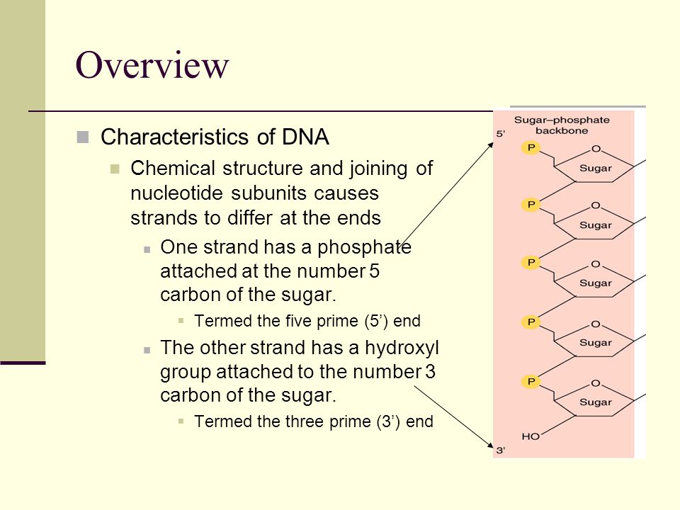 Overview Characteristics of DNA