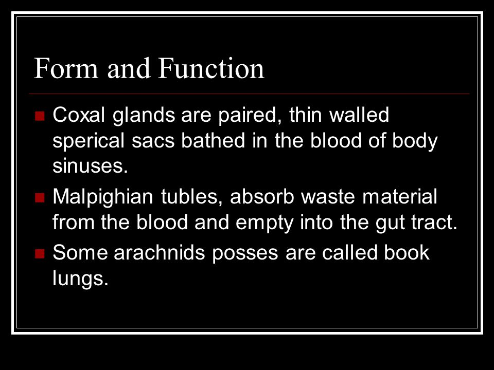 Form and Function Coxal glands are paired, thin walled sperical sacs bathed in the blood of body sinuses.