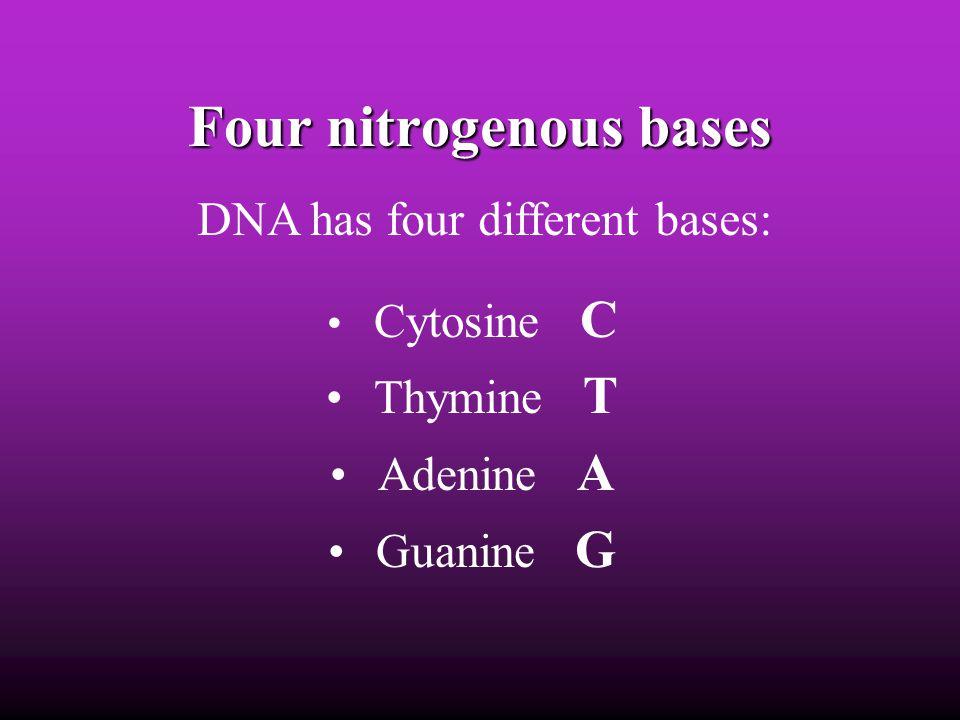 Four nitrogenous bases