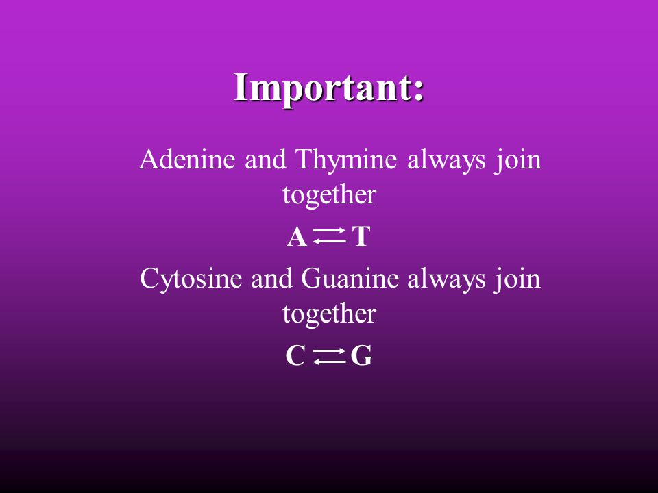 Important: Adenine and Thymine always join together A T