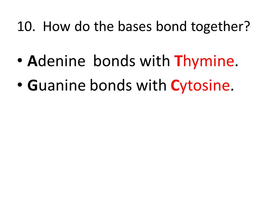 10. How do the bases bond together