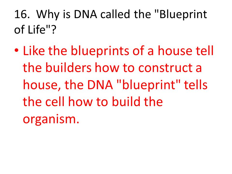 16. Why is DNA called the Blueprint of Life