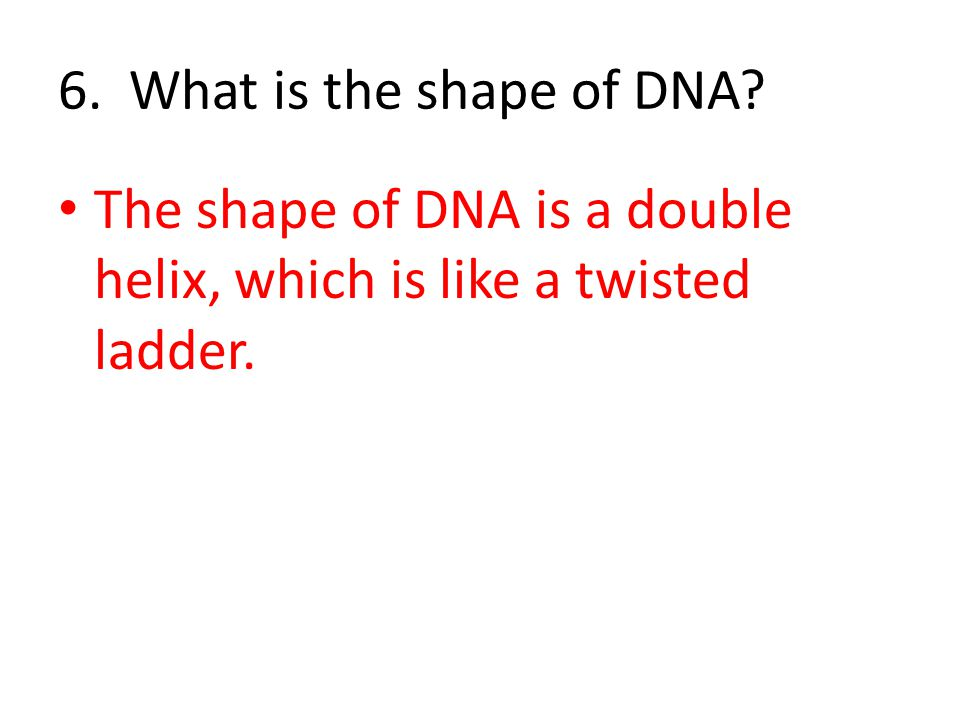6. What is the shape of DNA The shape of DNA is a double helix, which is like a twisted ladder.