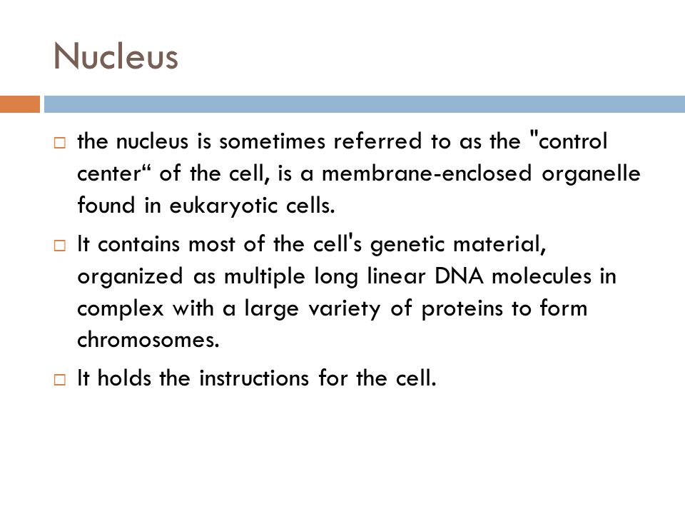 Nucleus the nucleus is sometimes referred to as the control center of the cell, is a membrane-enclosed organelle found in eukaryotic cells.