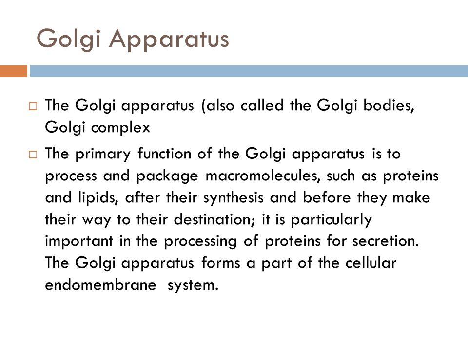 Golgi Apparatus The Golgi apparatus (also called the Golgi bodies, Golgi complex.
