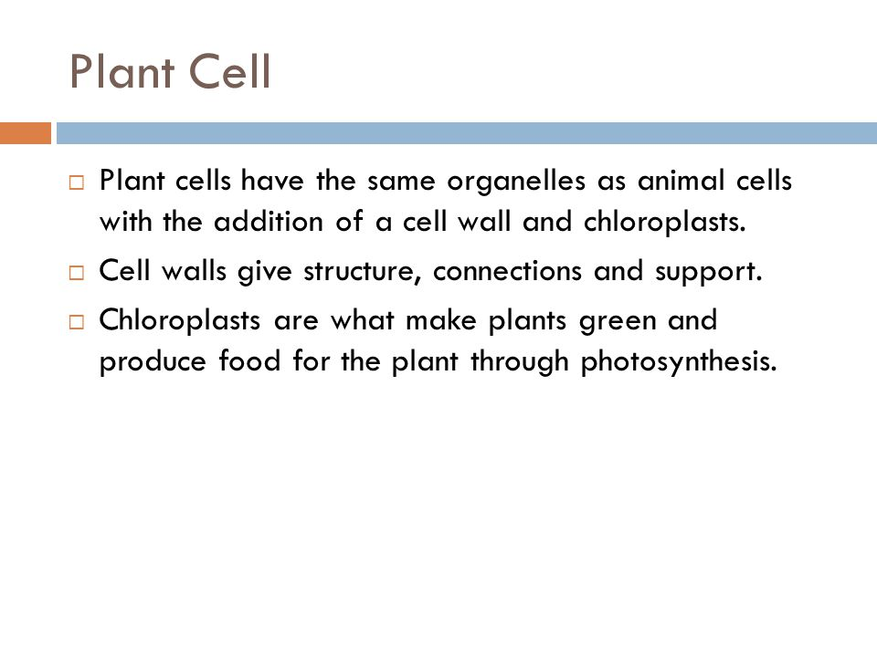 Plant Cell Plant cells have the same organelles as animal cells with the addition of a cell wall and chloroplasts.