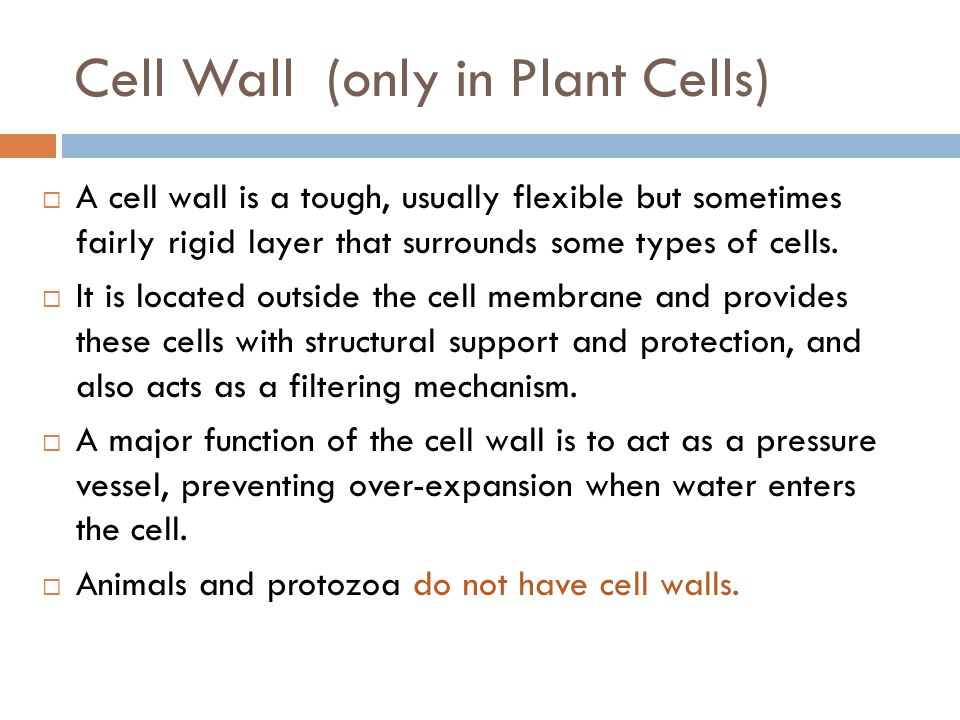 Cell Wall (only in Plant Cells)