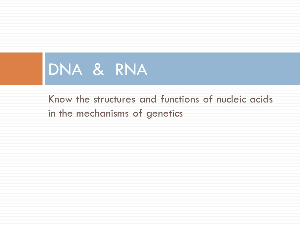 DNA & RNA Know the structures and functions of nucleic acids in the mechanisms of genetics