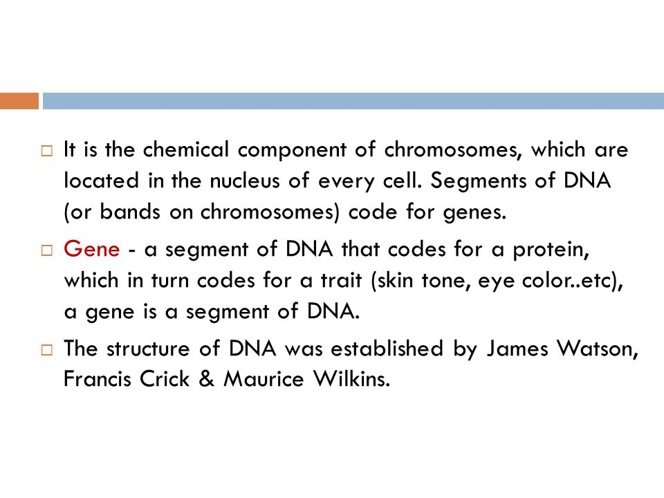 It is the chemical component of chromosomes, which are located in the nucleus of every cell. Segments of DNA (or bands on chromosomes) code for genes.