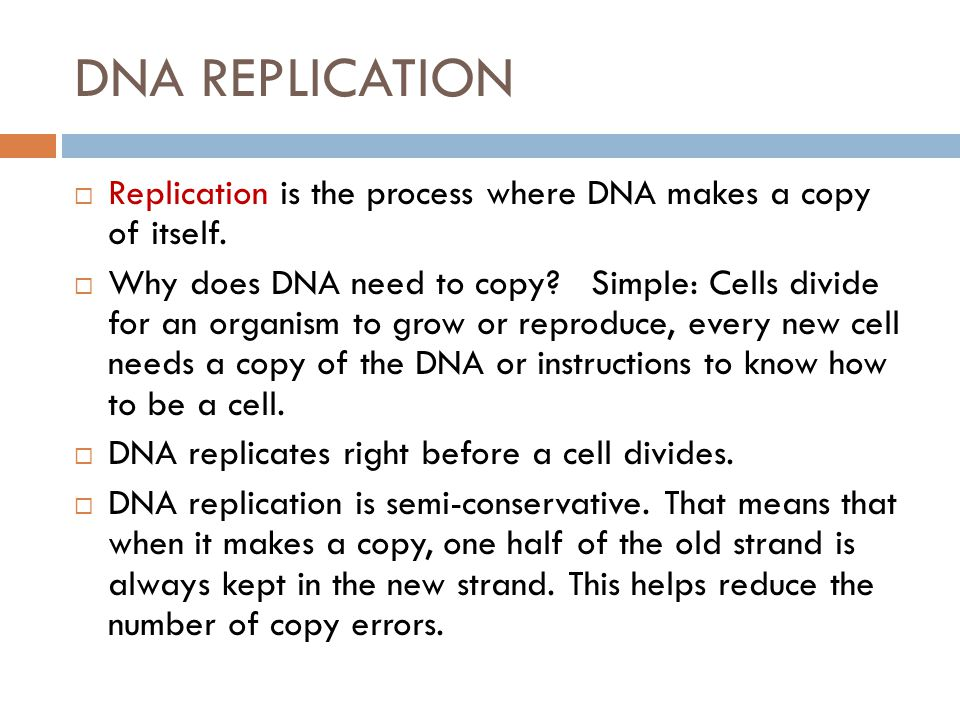 DNA REPLICATION Replication is the process where DNA makes a copy of itself.