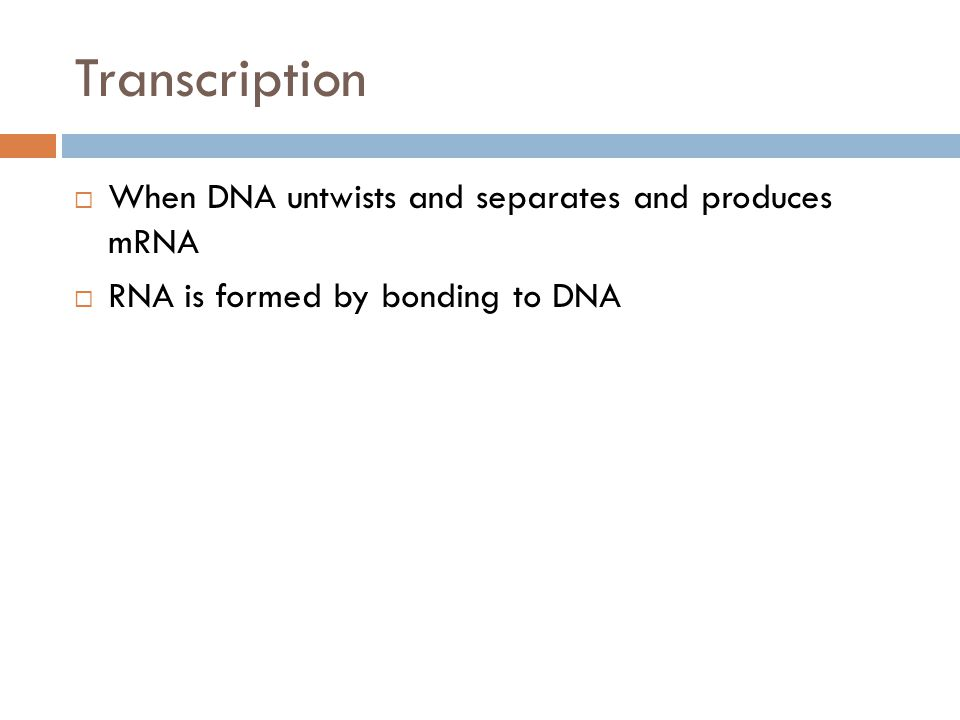 Transcription When DNA untwists and separates and produces mRNA