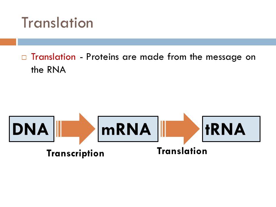 DNA mRNA tRNA Translation