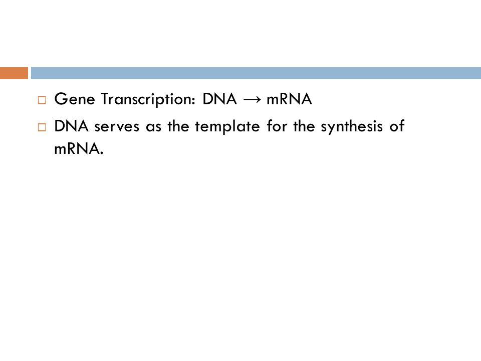 Gene Transcription: DNA → mRNA