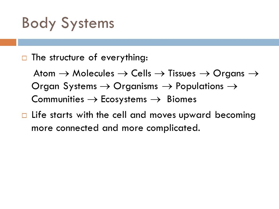 Body Systems The structure of everything: