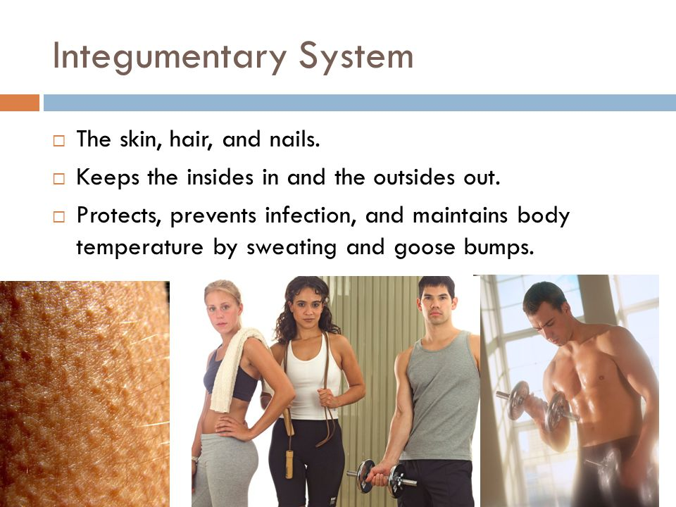 Integumentary System The skin, hair, and nails.
