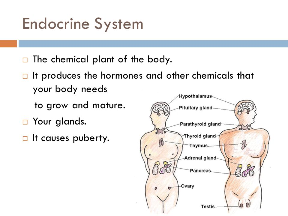 Endocrine System The chemical plant of the body.