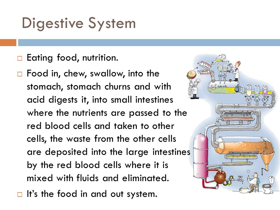 Digestive System Eating food, nutrition.