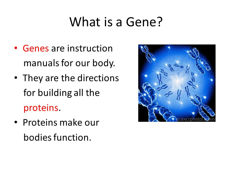 What is a Gene Genes are instruction manuals for our body.