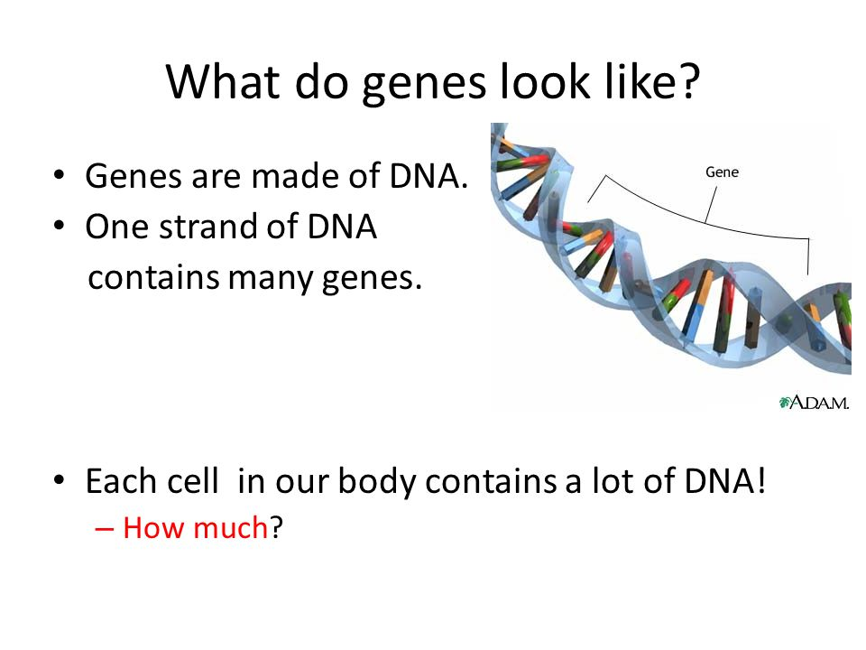What do genes look like Genes are made of DNA. One strand of DNA