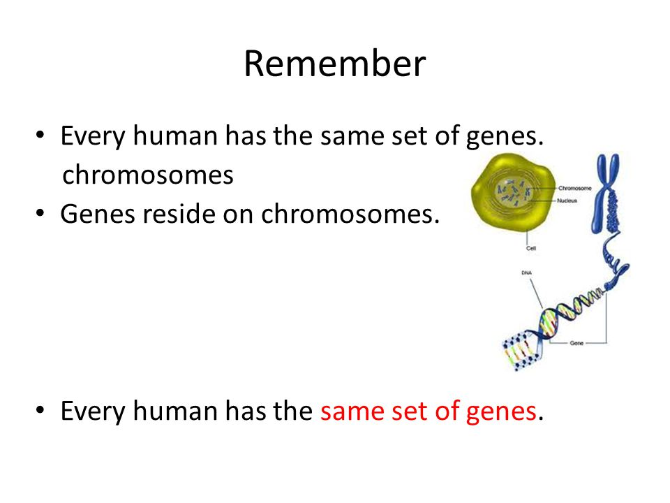 Remember Every human has the same set of genes. chromosomes