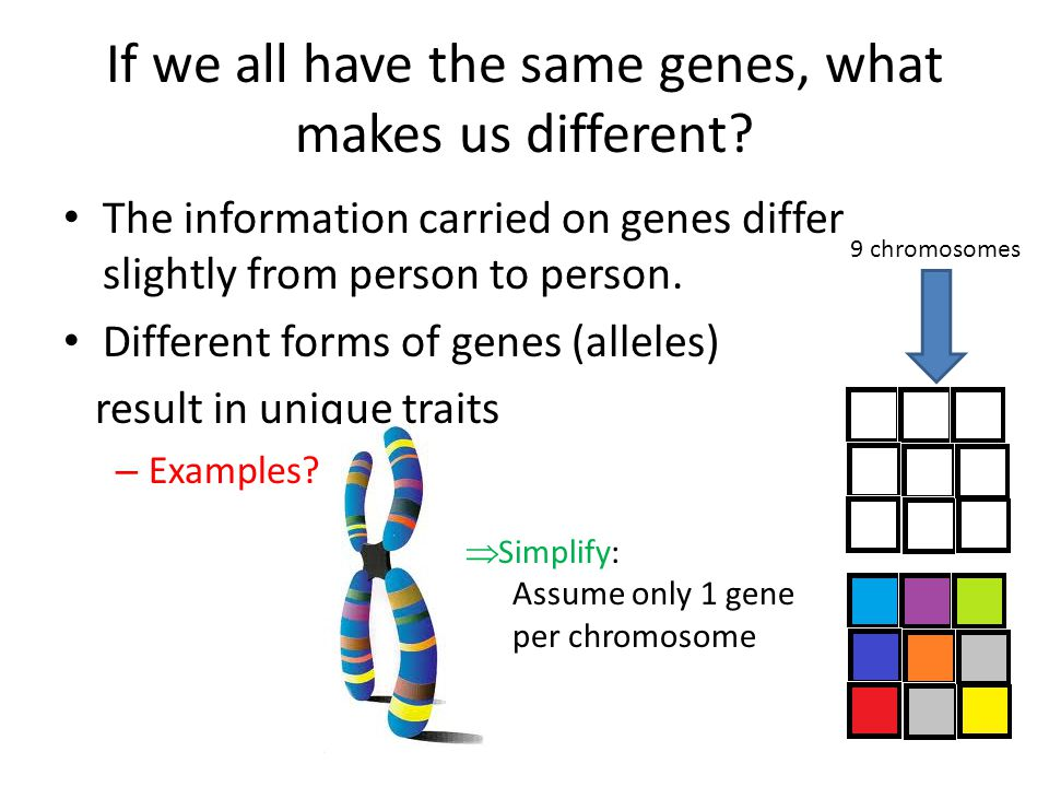 If we all have the same genes, what makes us different