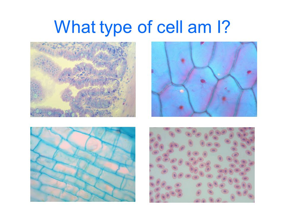 What type of cell am I