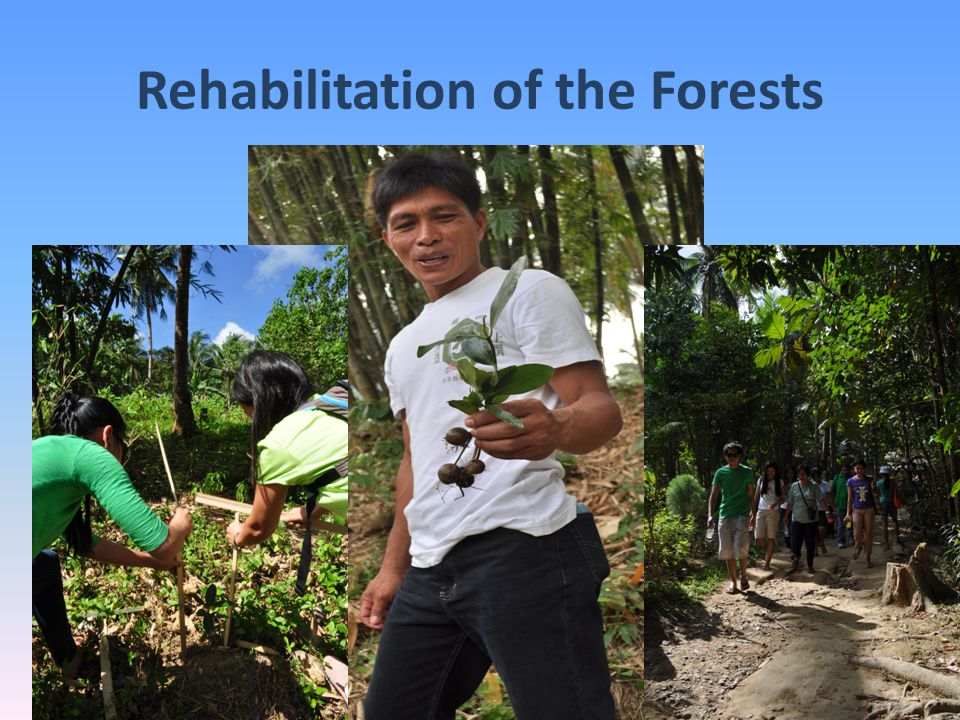 Rehabilitation of the Forests