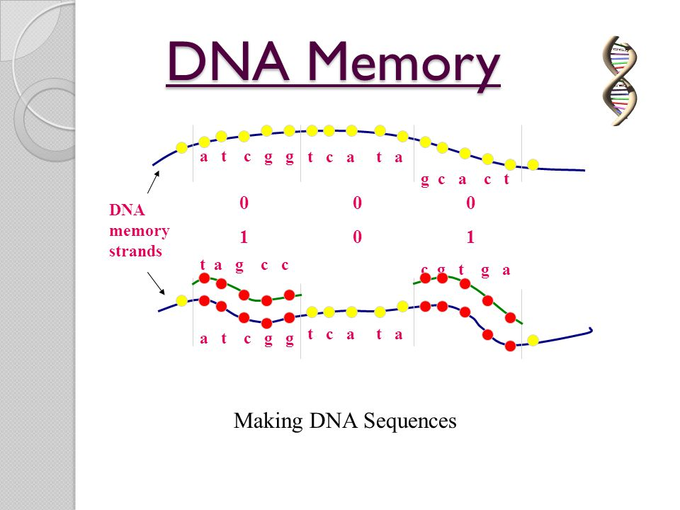 DNA Memory Making DNA Sequences 1 a t c g g t c a t a g c a c t DNA