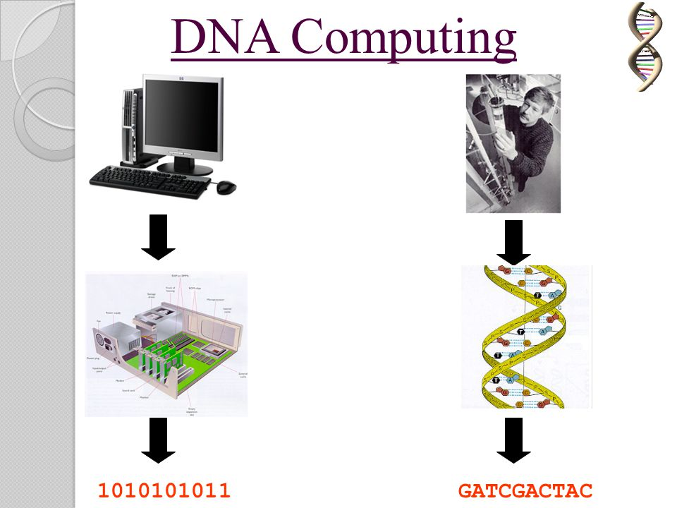 DNA Computing 1010101011 GATCGACTAC