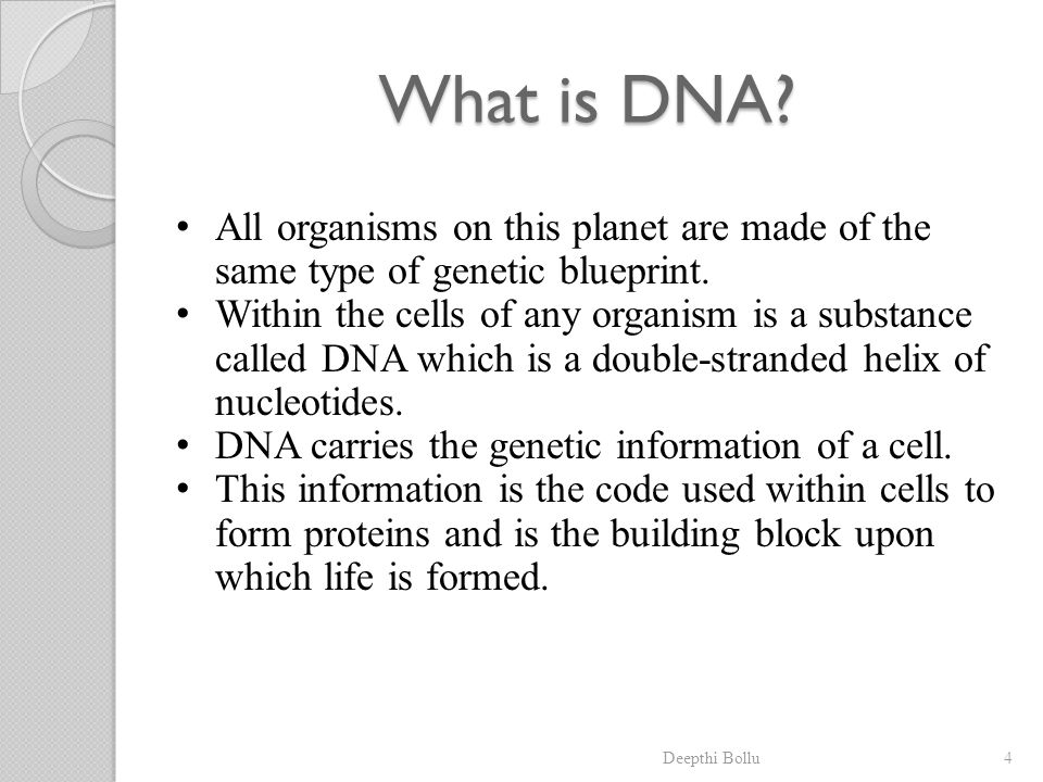 What is DNA All organisms on this planet are made of the same type of genetic blueprint.