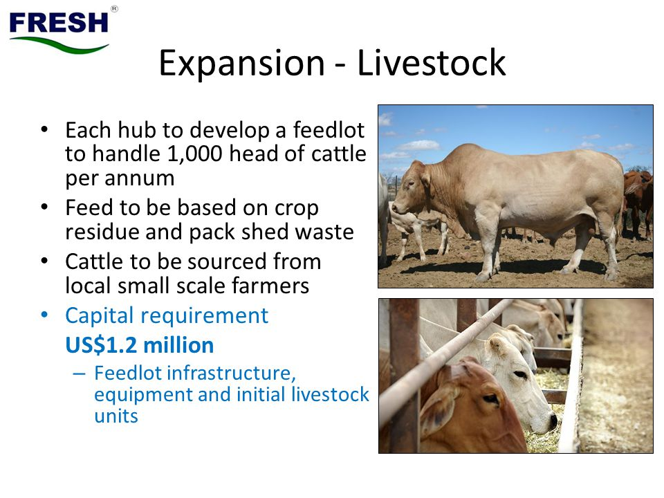 Expansion - Livestock Each hub to develop a feedlot to handle 1,000 head of cattle per annum. Feed to be based on crop residue and pack shed waste.