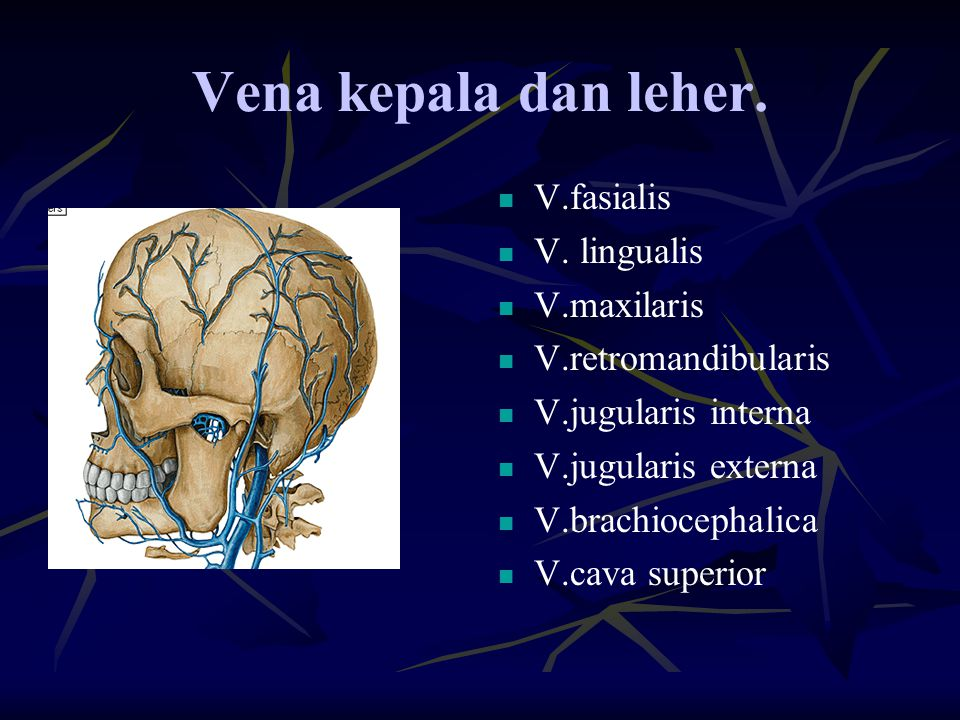 Vena kepala dan leher. V.fasialis V. lingualis V.maxilaris