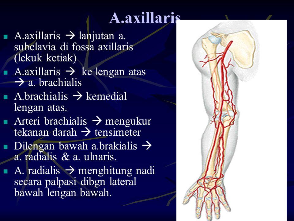 A.axillaris. A.axillaris  lanjutan a. subclavia di fossa axillaris (lekuk ketiak) A.axillaris  ke lengan atas  a. brachialis.