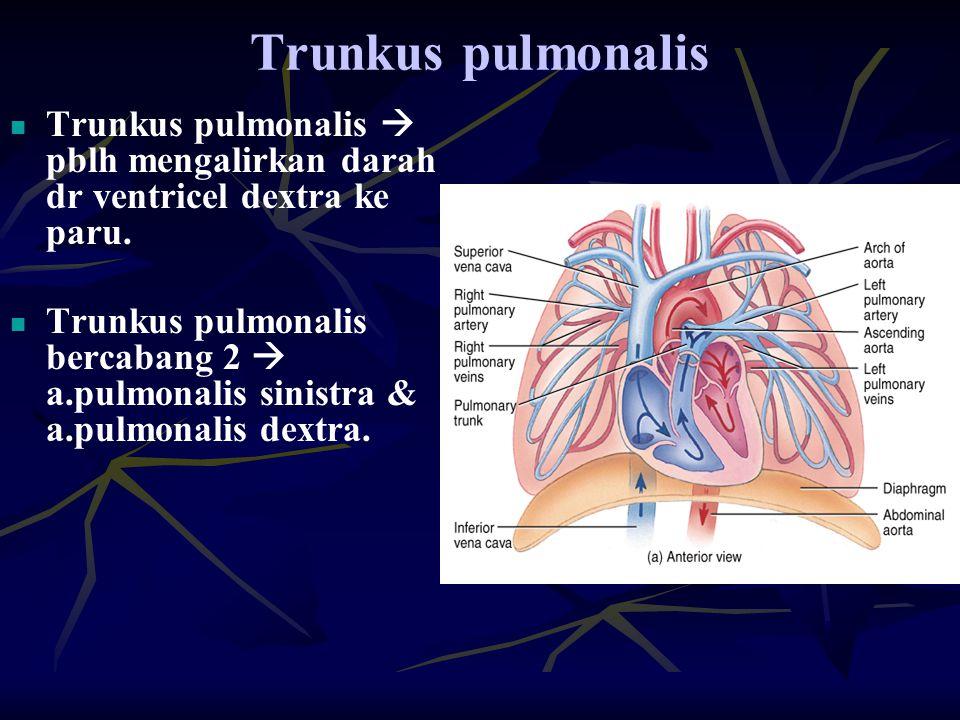 Trunkus pulmonalis Trunkus pulmonalis  pblh mengalirkan darah dr ventricel dextra ke paru.
