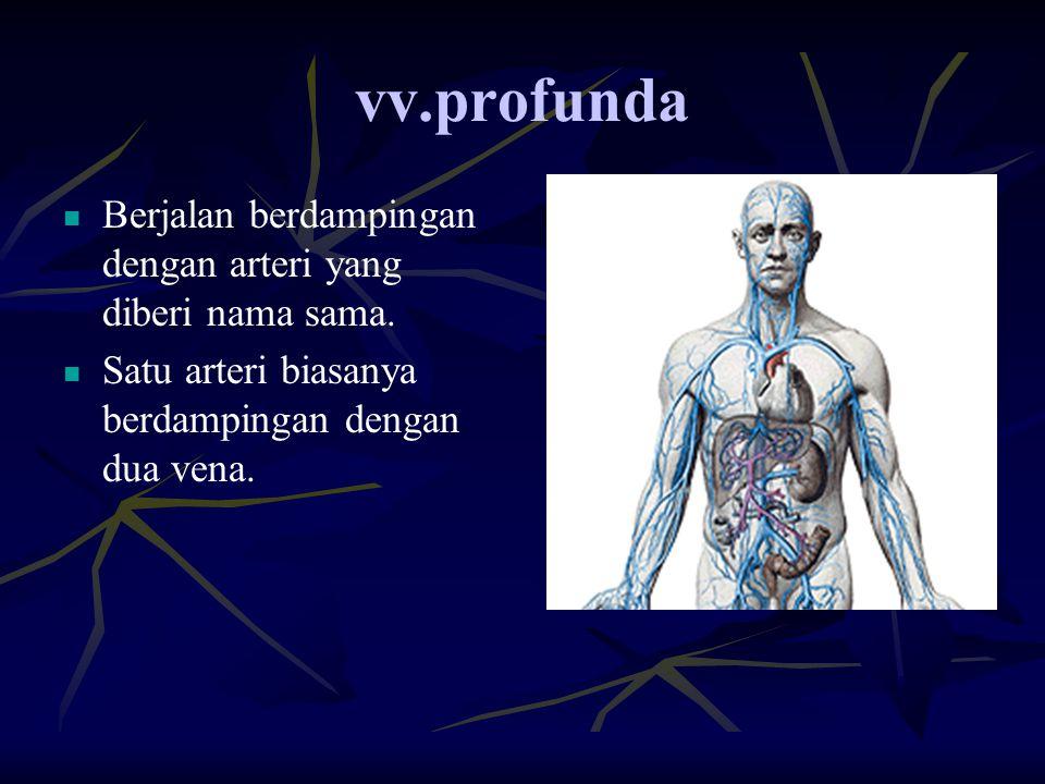 vv.profunda Berjalan berdampingan dengan arteri yang diberi nama sama.