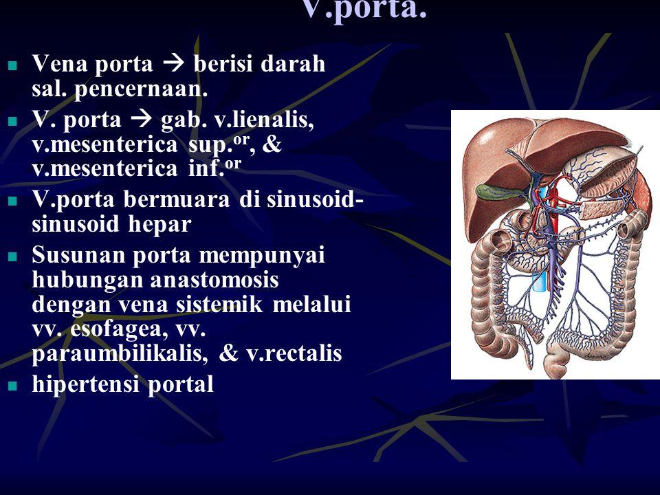 V.porta. Vena porta  berisi darah sal. pencernaan.