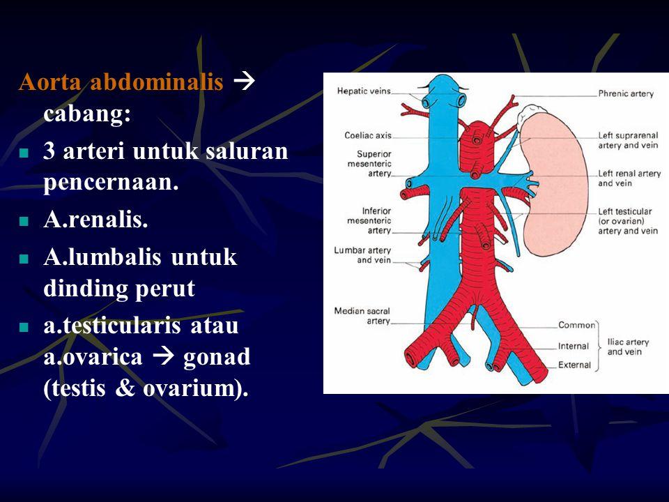 Aorta abdominalis  cabang: