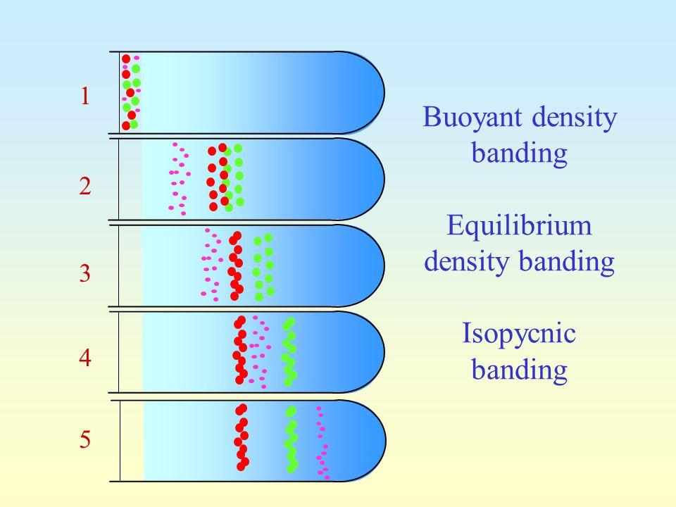 Buoyant density banding Equilibrium density banding Isopycnic banding