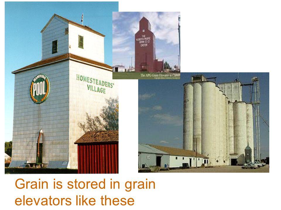 Grain is stored in grain elevators like these