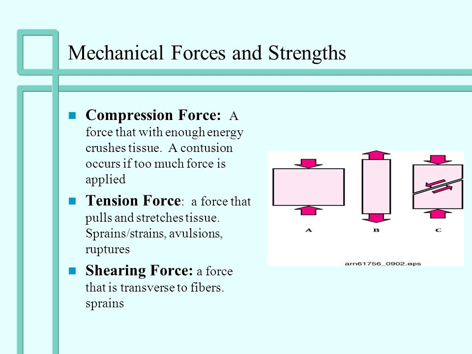 Mechanical Forces and Strengths