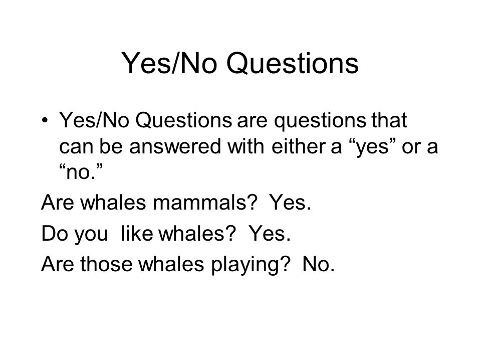 Yes/No Questions Yes/No Questions are questions that can be answered with either a yes or a no.