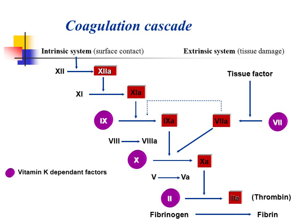 Coagulation cascade Intrinsic system (surface contact)