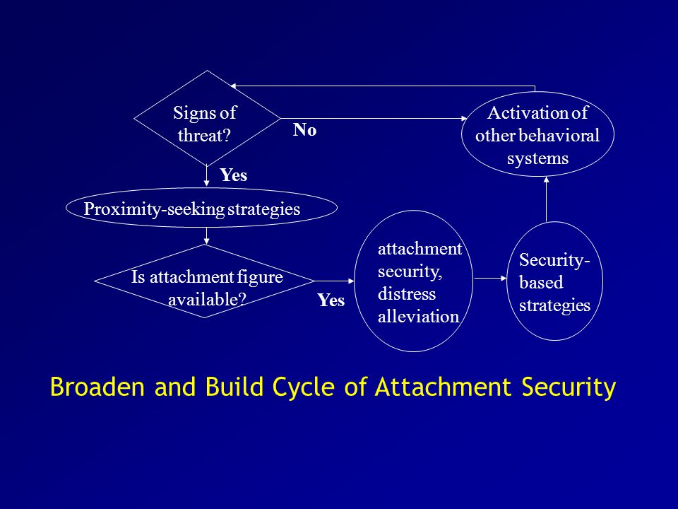 Broaden and Build Cycle of Attachment Security