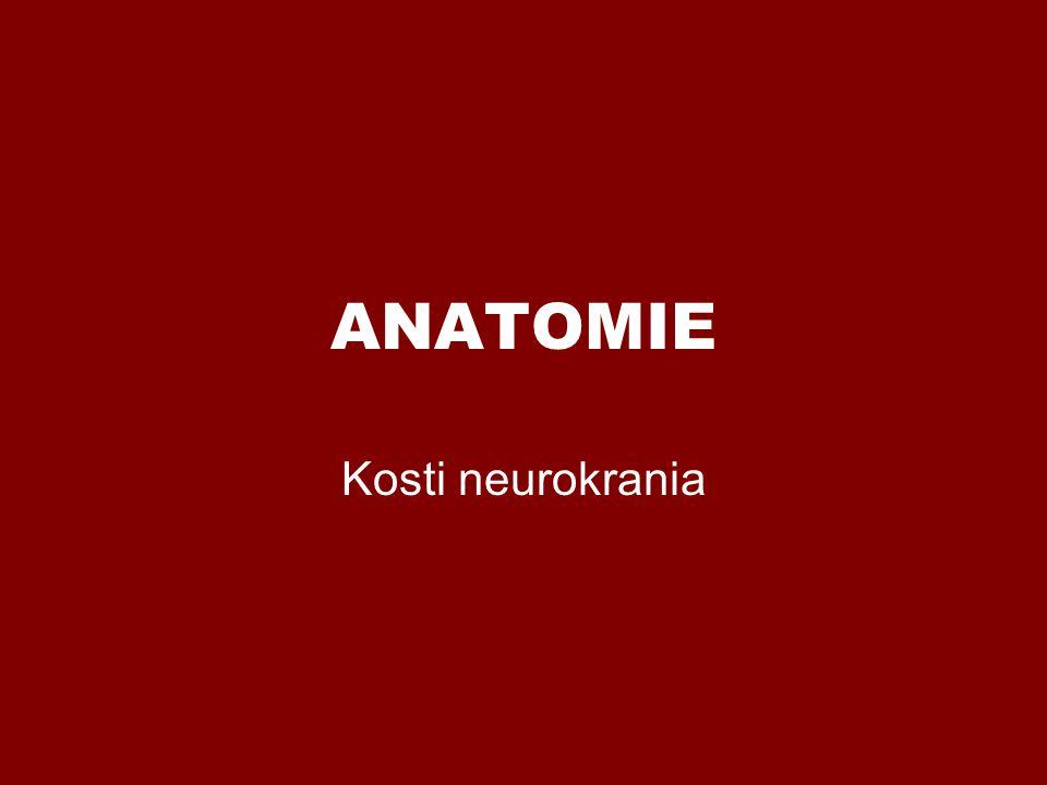 ANATOMIE Kosti neurokrania